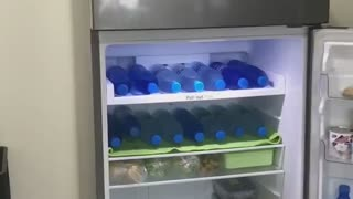 Doggy Cools off in Comfy Fridge