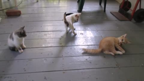 Gatito determinado a quitarle el juguete a su hermano mayor