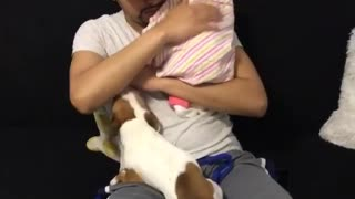 Jealous Puppy Tries To Steal Owner's Attention From Newborn Baby
