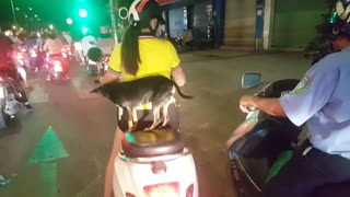 Precious Pup Takes a Night Time Motorcycle Ride