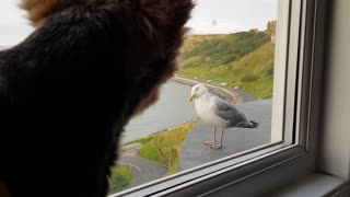 Yorkshire Terrier and Seagull