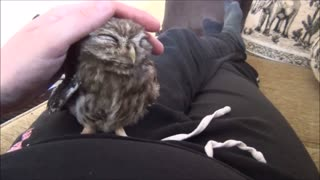 Tiny sleeping owl is just too cute for words!  - Video
