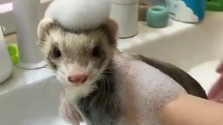 Sonia giving her baby little squirrel cleaning bath for Christmas party day