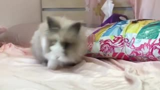 Bunny going crazy jumping on pink bed