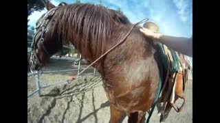 Horse Abuse (It Is So Sad!) - Video