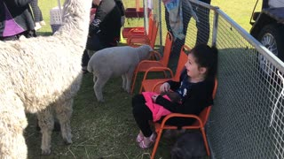 Little girl finds herself surround by animals at petting farm