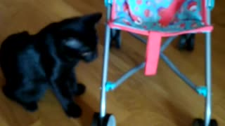Cat playing in a pram