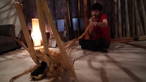Man turns a spider crab into didgeridoo