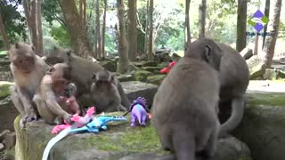Baby monkeys playing with animal toys