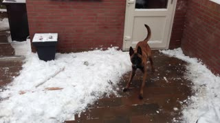 Excited dog experiences first snowfall