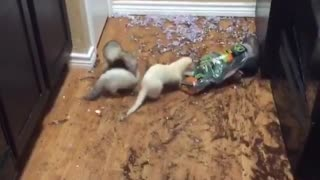 Aftermath of unsupervised ferrets 🐭 - Video