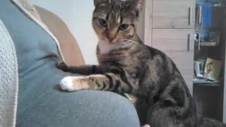 Our kitten speaks with the baby - Video