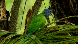 Beautiful green parrot in nature