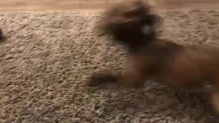 Dog spins out of control  - Video