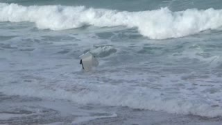 Wetsuite guy tries to surf with broken white surfboard