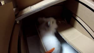 Rabbit enjoys homemade cardboard hotel - Video