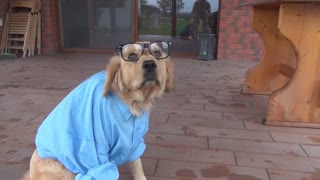 Happy the doctor Dog - Video