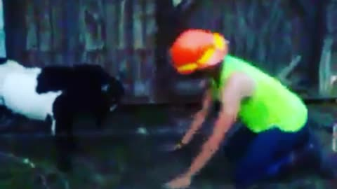 Teen Goes Head to Head with Goat