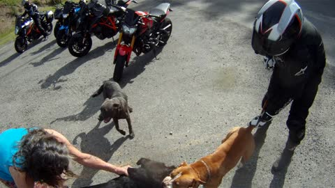 Bikers Help Disengage Roadside Tiff between Pooches