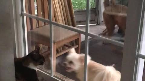 Dog And Cat Fight It Out From Either Side Of A Glass Door