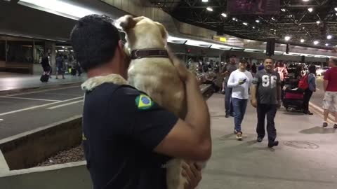 Dog Goes Crazy With Happiness To See His Owner Again