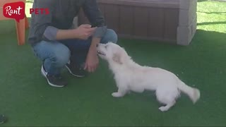 Meet Ahsoka from OC Animal Care, the adorable Terrier mix - Video