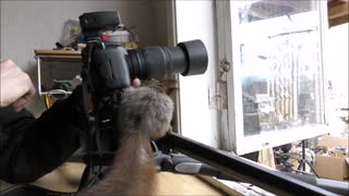 Curious Squirrel Interacts With Photographer And Investigates His Equipment