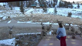 This Woman's Call Brings All The Deer To Her Yard - Video