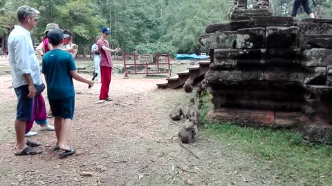 Family monkeys are outside Bayon Temple so pitiful