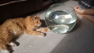 The cat first saw an aquarium with fish