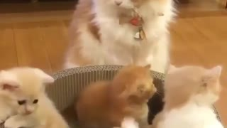 Mamy Cat Watching Over her Kittens - Video