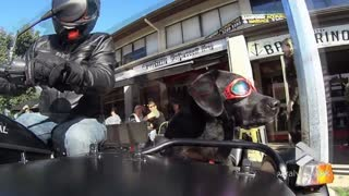 Biker dog riding shotgun in sidecar