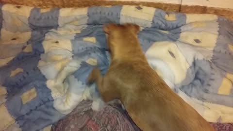 My dog jump from one bed to other