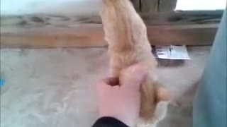 Stray kitten finally warms up to human contact - Video