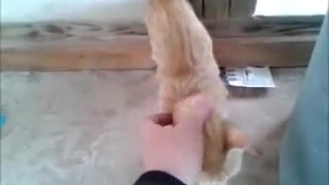 Stray kitten finally warms up to human contact