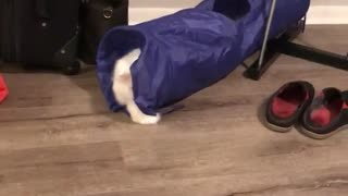 Cat hits ball through tunnel - Video
