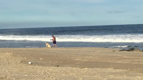 Dog just wants to dog