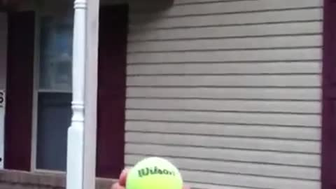 Attempted to throw a ball at a wasp nest