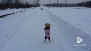 Poodle stands to attention