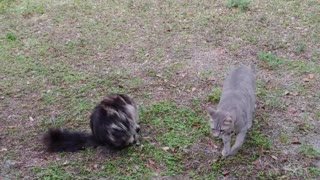 My Feral Cats