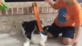 Kid uses incredibly tolerant cat for toy car ramp