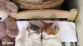 Two cats sleep on their bed in a beautiful way