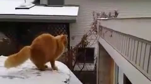 Cat Fails Jump From Snow Covered Car