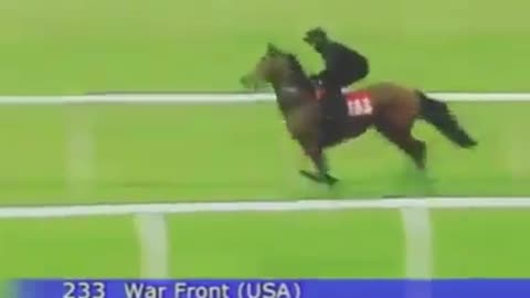 Watch: This Horse Gallops At Full Speed!!