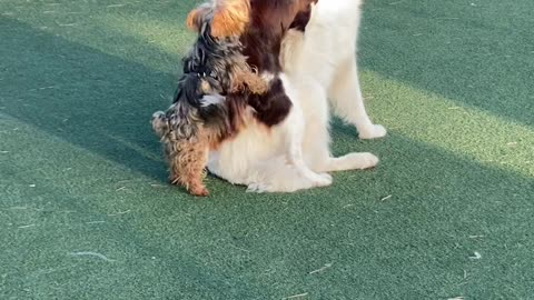 Dogs Get Super Excited to See Each Other at Dog Park