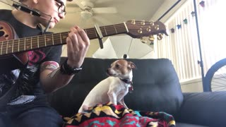 Dog Howling with Harmonica - Video