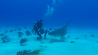 Very curious tiger shark attacks diver's camera