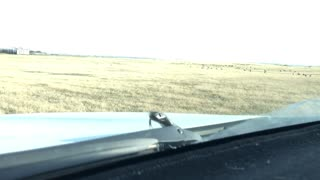 Snake Out For a Drive - Video