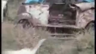 Cats are doing Funny activities  - Video