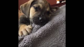Puppy finds perfect spot  - Video